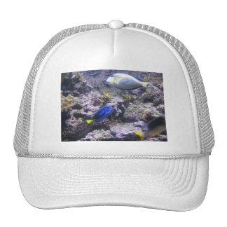 Pretty Fishies Mesh Hat