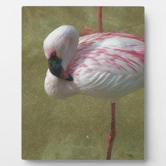 Pretty Flamingo Plaque