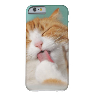 Pretty Fofo Cat if Licking Barely There iPhone 6 Case