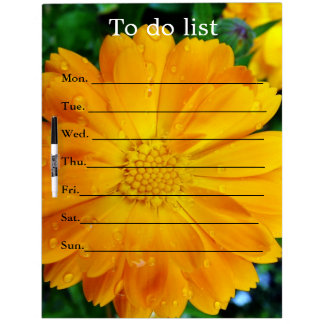 pretty, fresh yellow daisy flower, dry erase board