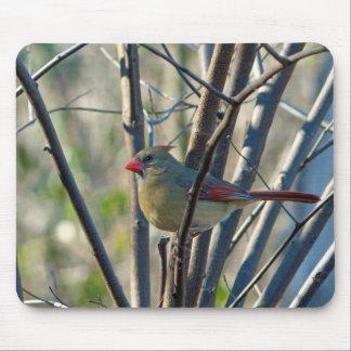Pretty Girl Female Cardinal Mouse Pad