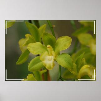 Pretty Green Orchids Print