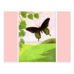 Pretty Green Vintage Butterfly Postcard
