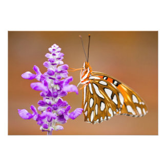 Pretty Gulf Fritillary Butterfly Art Photo