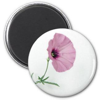 Pretty In Pink Fridge Magnets