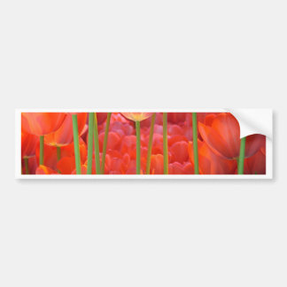 pretty in red bumper sticker