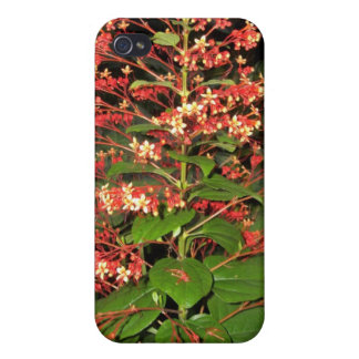 Pretty in Red Flowering Plant Cover For iPhone 4