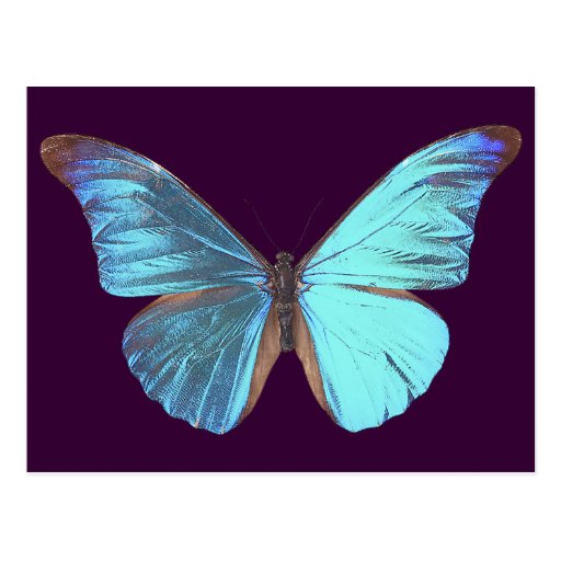 Pretty Iridescent Blue Butterfly Post Card