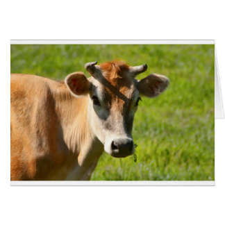 Pretty Jersey Cow Stare Greeting Card