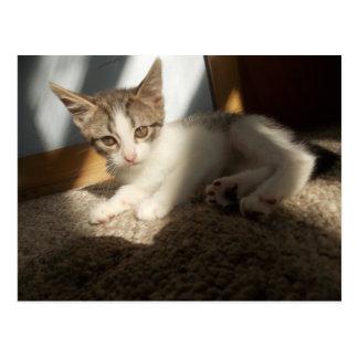 Pretty kitten in light from window postcard