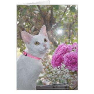 Pretty Kitten Note Card