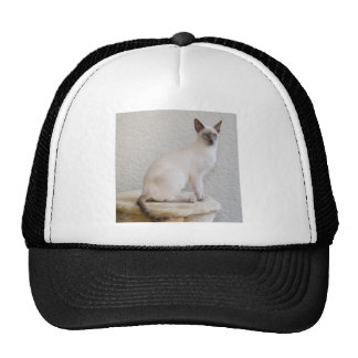 Pretty kitty hat
