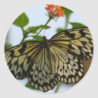 Pretty Lady - Butterfly Sticker