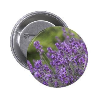 Pretty Lavender Fields Button