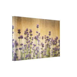 Pretty Lavender Flowers Canvas Print