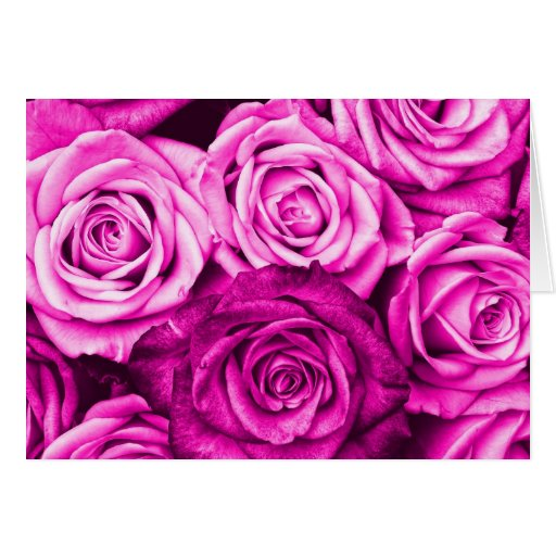 Pretty Magenta Pink Roses Flower Bouquet Greeting Cards