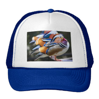 Pretty Mandarin Ducks,  Trucker Hat