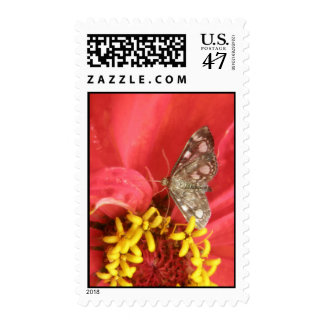 Pretty Moth on Red Flower Postage Stamps