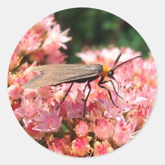 Pretty Moth ~ sticker