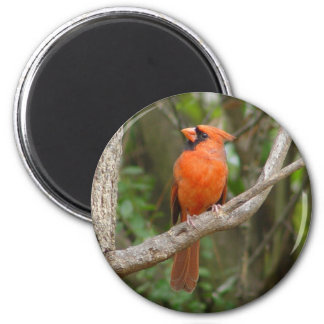 Pretty Northern Cardinal Bird Magnet