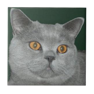 Pretty Orange Eyed  Kitty Tile