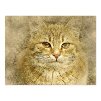 Pretty Orange Kitty | Abstract | Watercolor Postcard