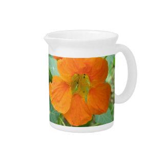 Pretty Orange Nasturtium Flower Pitcher