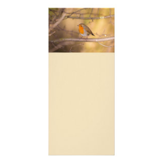 Pretty Orange Robin In The Woods Customized Rack Card