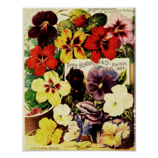Pretty Pansies Poster