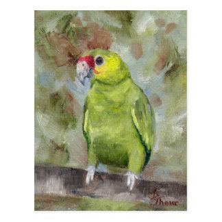 Pretty Parrot III Postcard