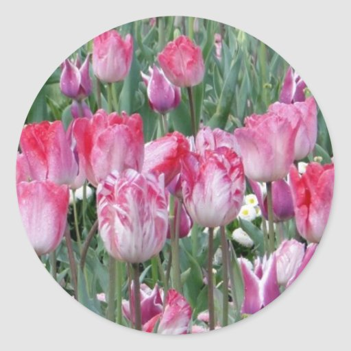 Pretty Pastel Tulips Stickers