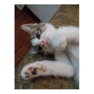 Pretty Paws Kitten Postcard