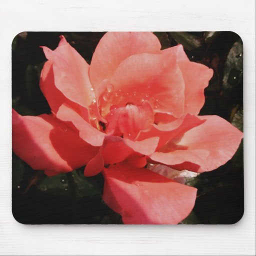 Pretty Peach Pink Rose floral Mouse Pad