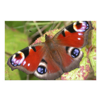 Pretty Peacock Butterfly Stationery