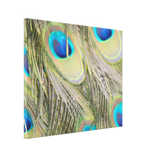 Pretty Peacock Feathers Canvas Print