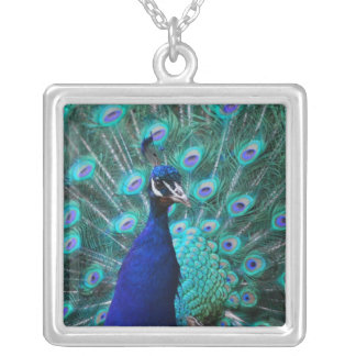 Pretty Peacock Sterling Silver Necklace
