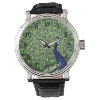 Pretty Peacock Watch