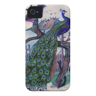 Pretty Peacock with Bird iPhone 4 Covers