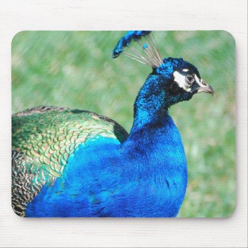 Pretty Peafowl Mouse Pad