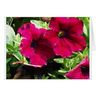 Pretty Petunia Card