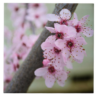 Pretty Pink Cherry Blossom Flowers Tile