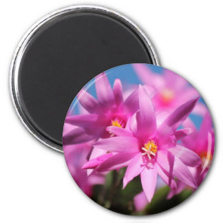 Pretty Pink Christmas Cactus Flowers Blooming Refrigerator Magnets