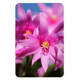 Pretty Pink Christmas Cactus Flowers Blooming Flexible Magnets