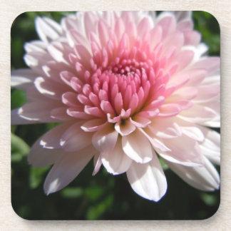 Pretty Pink Chrysanthemum Beverage Coasters