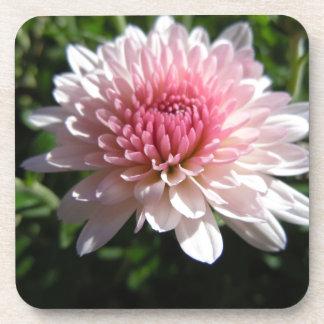 Pretty Pink Chrysanthemum Drink Coasters