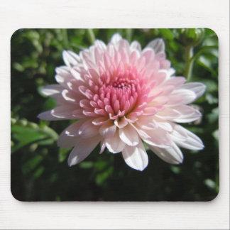 Pretty Pink Chrysanthemum Mousepad