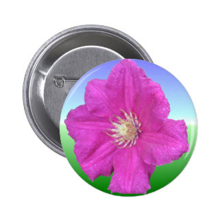 Pretty Pink Clematis Flower Buttons