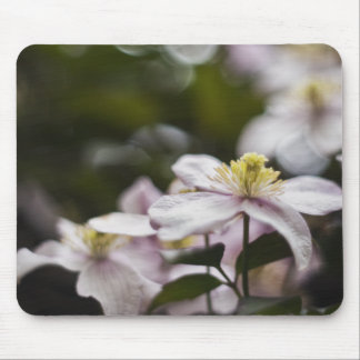 Pretty Pink Clematis flower Mouse Pad