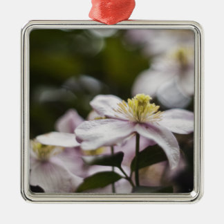 Pretty Pink Clematis flower Silver-Colored Square Decoration