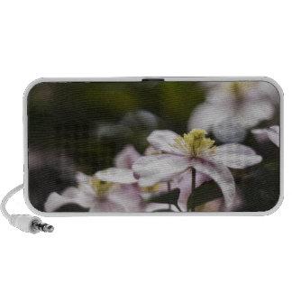 Pretty Pink Clematis flower iPod Speaker